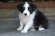 9月1日産まれの子犬の画像