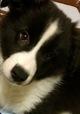 仔犬の名前が決まりました。の画像