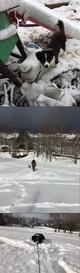 初めての雪ですの画像